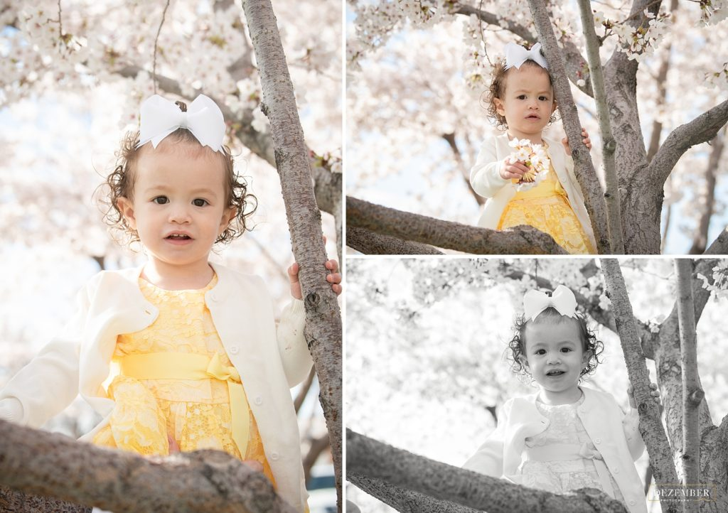 Cherry Blossom baby portraits