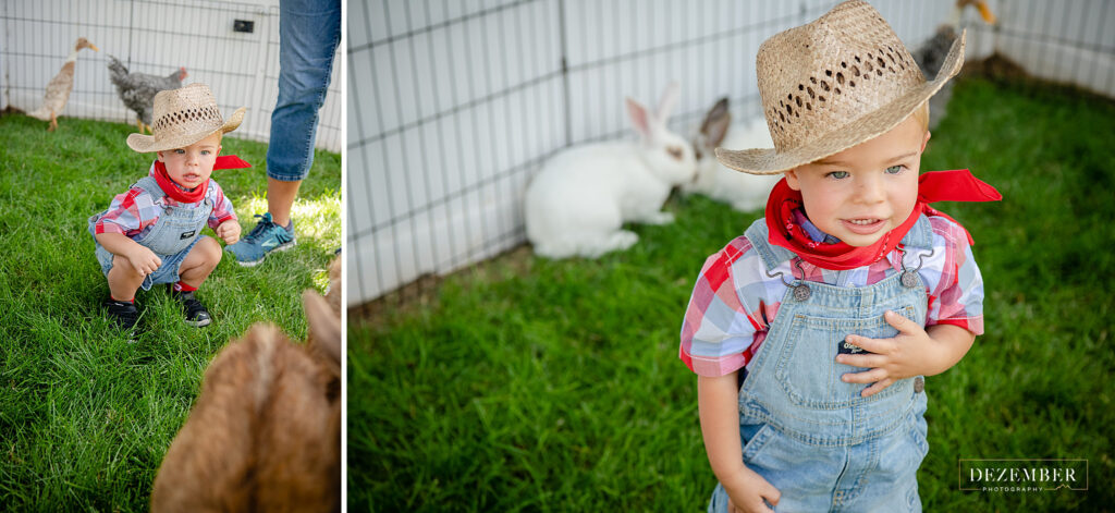 Boy plays with bunnies, chickens and goats