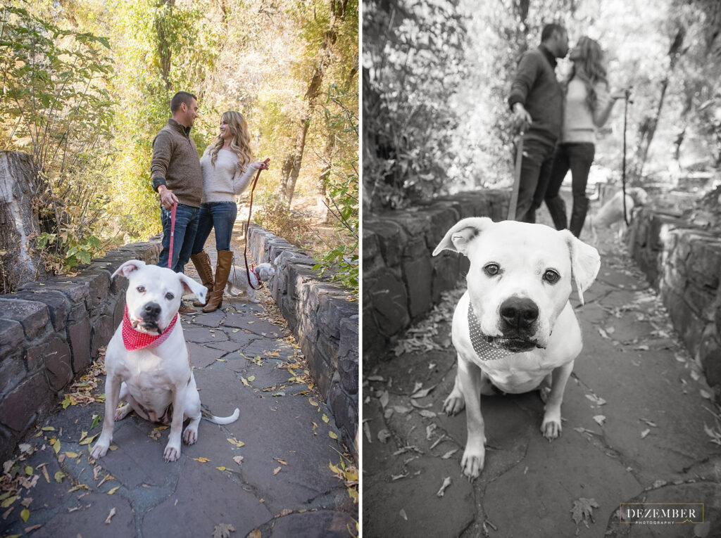 Fall engagements couple poses with their dog at city creek